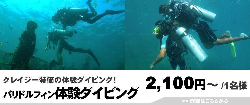 バリドルフィン 体験ダイビング