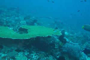 レンボガン&ヌサペニダ島6