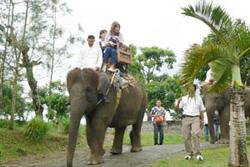 なんと象に乗ってお散歩も!