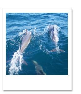 イルカたちと一緒に走ります