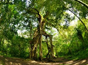 バリ植物園3
