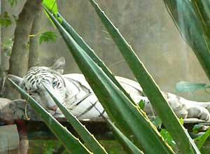 バリ動物園4