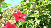 至福のバリ島観光 新着情報 ページが新しくなりました! 様々なバリ島観光ツアーメニューをご紹介している至福のバリ島観光の新しい情報をお知らせする新着情報ページです。バリ島観光ツアーの最新情報をより早くお届けいたします!