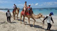 2019年3月3日 Bali Camel Adventure(バリキャメルアドベンチャー)の体験取材に行ってきました! バリ島の空港のすぐ近くにあるケラン・ビーチで、ラクダと散歩を楽しむことができる、Bali Camel...