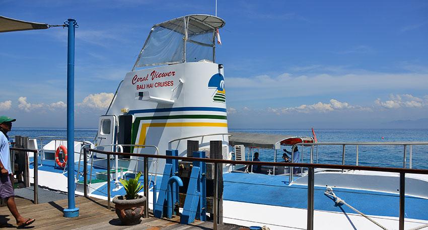 セミ潜水艦で海の中の景色も楽しめます
