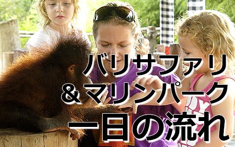 トキメキバリ島観光 厳選動物ふれあい バリ サファリ&マリンパーク 一日の流れ