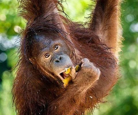 バリ動物園(バリズー) インドネシアではバリ動物園だけ!