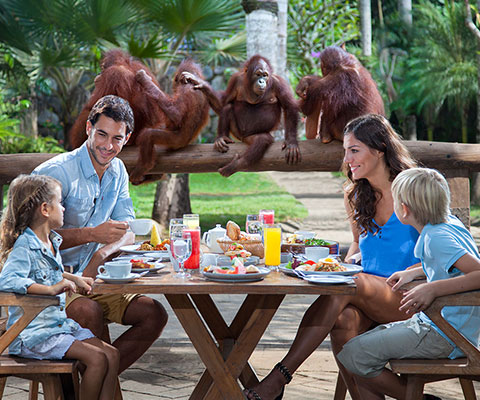 バリ動物園(バリズー) 子供オランウータンと朝食