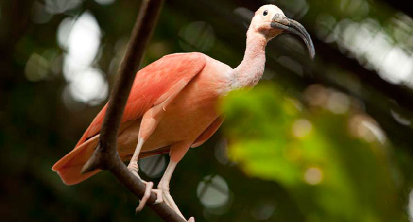 250種類以上の鳥がいるパークです