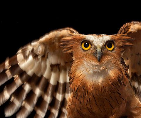 鳥のナチュラルパークをお楽しみください