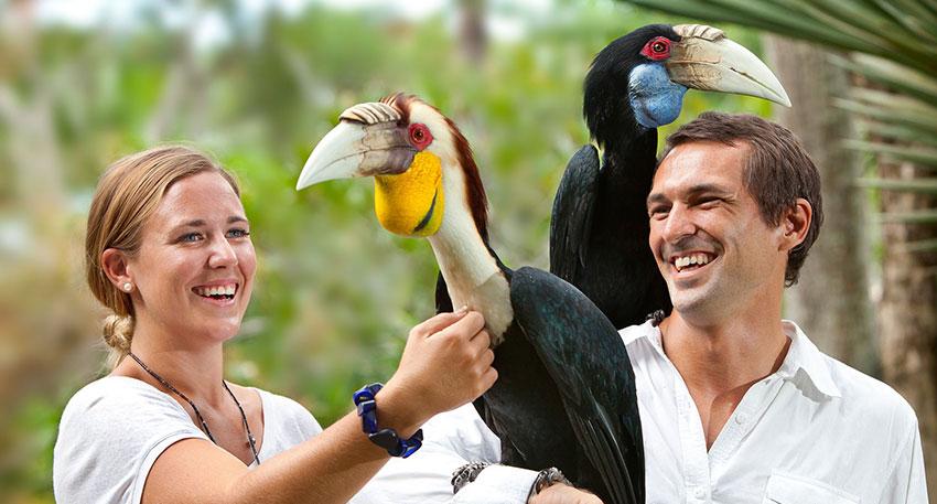 南アジアを中心に世界中の鳥がいます