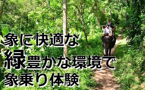 トキメキバリ島観光 厳選動物ふれあい エレファントキャンプ