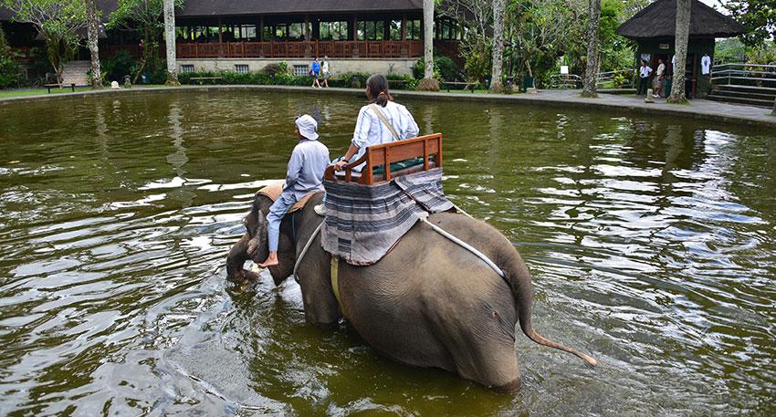 象が最後に池に入ります