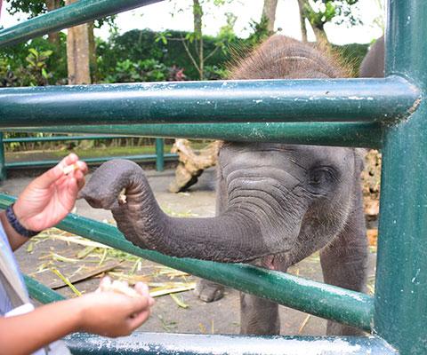 象のエサあげ体験も可能