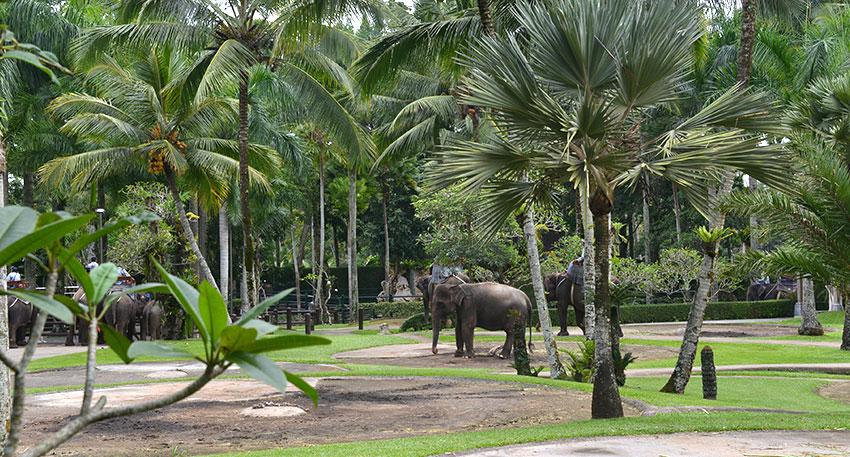 スマトラ象が広大な敷地に暮らしていま