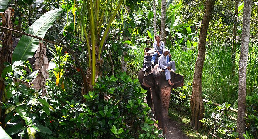 ゆっくりと象に乗って散歩
