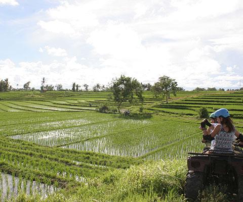 田んぼの景色が広がるコース
