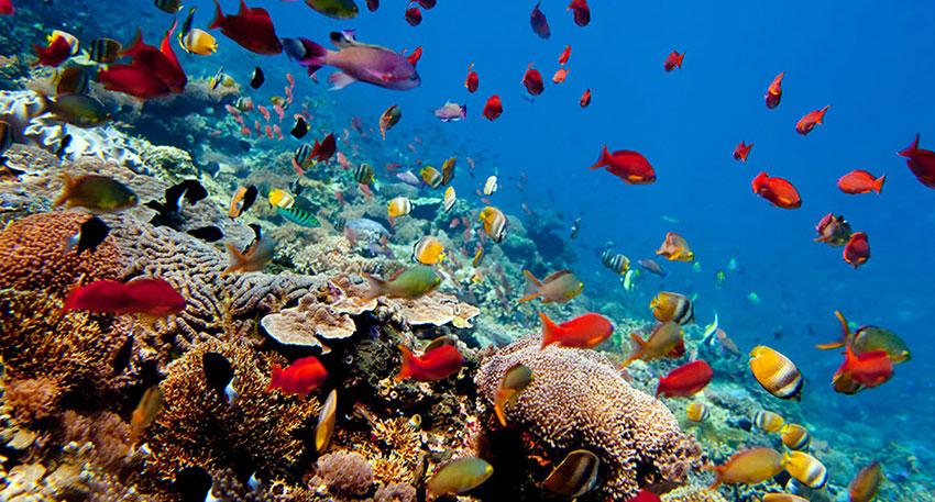 美しい海の世界をお楽しみください