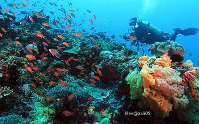 トキメキバリ島観光 厳選レンボンガン島 ダイビング 画像