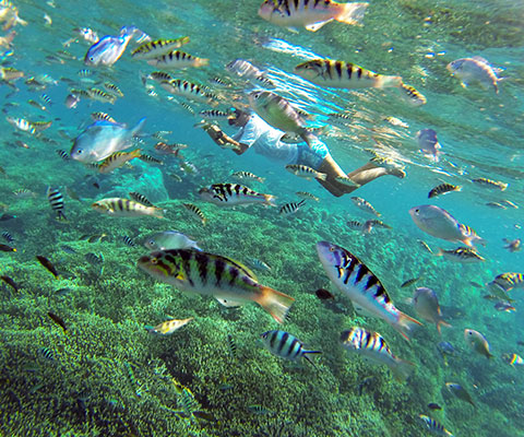 透明度が高く人気のシュノーケリングスポット・レンボンガン島