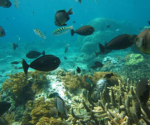 魚やサンゴ礁は色とりどり