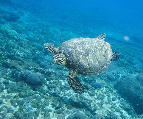 透明度が高いと評判の海
