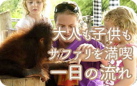 至福のバリ島観光 厳選動物ふれあい バリ サファリ&マリンパーク 一日の流れ
