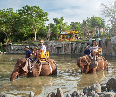 バリ動物園(バリズー) エレファントライド 園内を散歩します