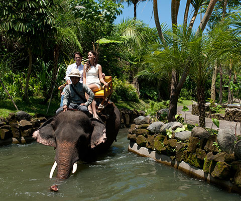 バリ動物園(バリズー) エレファントライド ジャングルのような景色