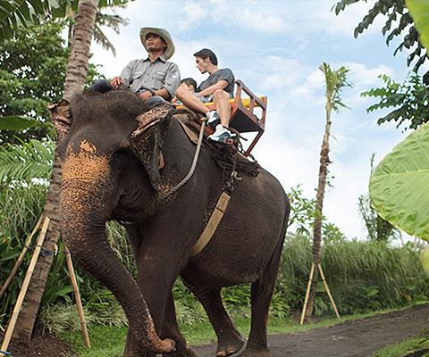 バリ動物園(バリズー) エレファントライド 清々しい景色です
