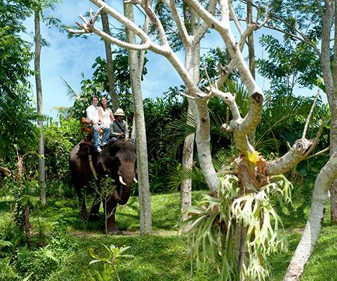 バリ動物園(バリズー) エレファントライドをお楽しみください