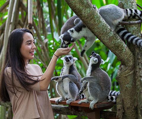 見て触って楽しめる動物園