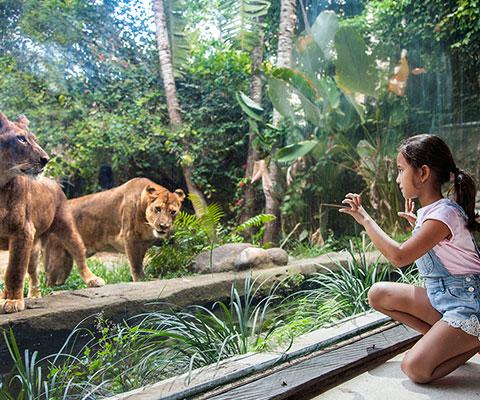 ライオンも近くで見られます