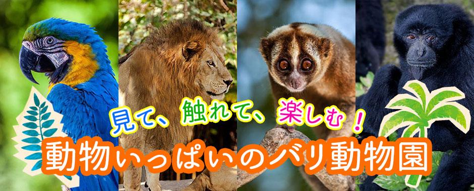 至福のバリ島観光 厳選動物ふれあい バリ動物園(バリズー)