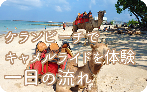 至福のバリ島観光 厳選動物ふれあい バリ キャメル アドベンチャー 一日の流れ