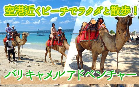 至福のバリ島観光 厳選動物ふれあい バリ キャメル アドベンチャー