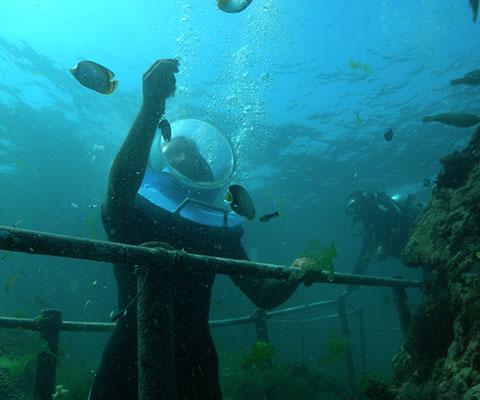 人気の海中探検シーウォーカー