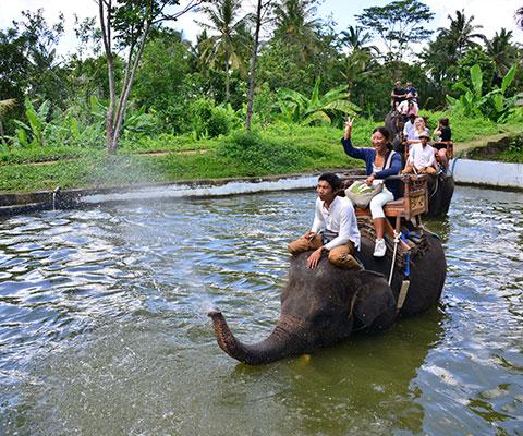 象が鼻から水を吹く演出