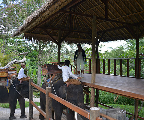 インドネシア固有種スマトラ象