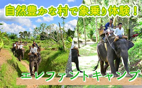 至福のバリ島観光 厳選動物ふれあい エレファントキャンプ