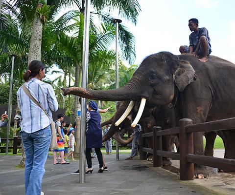象を間近でみることができます