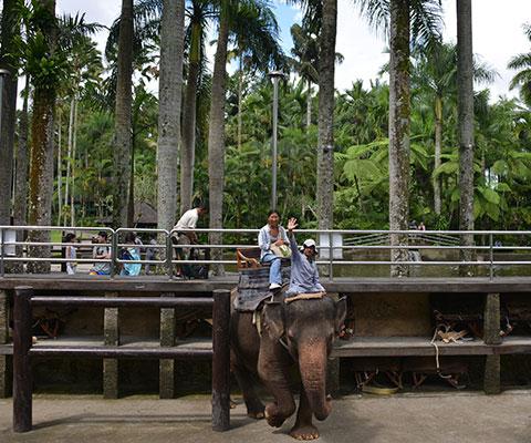 象を知り尽くした専属のトレーナー