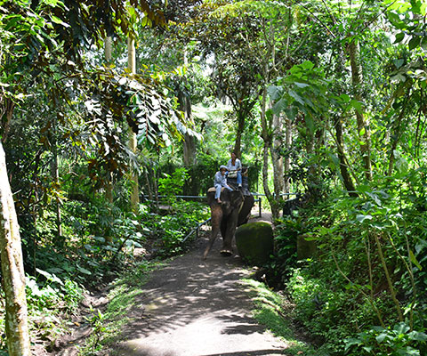 パーク内はジャングルのような熱帯植物が生い茂っています