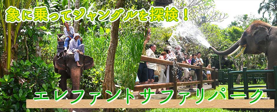 至福のバリ島観光 厳選アクティビティ エレファントサファリパーク