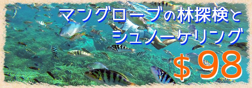 至福のバリ島観光 厳選レンボンガン島 マングローブ林自然探検とシュノーケリングツアー 特徴