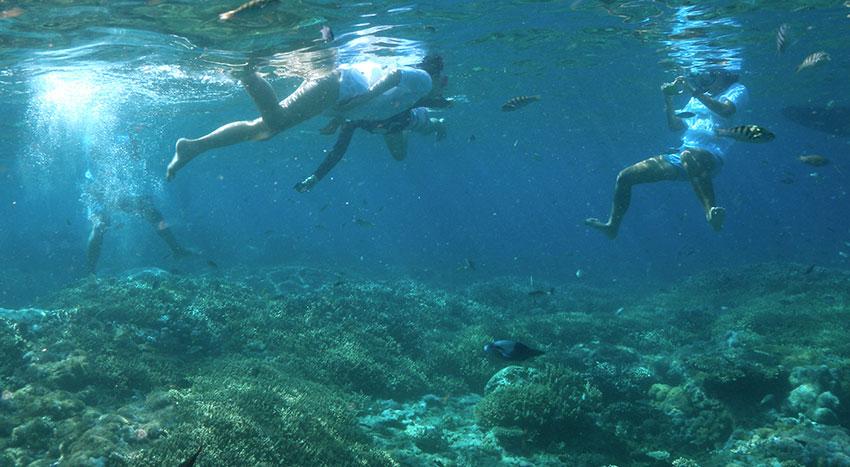 色鮮やかな魚やサンゴ礁