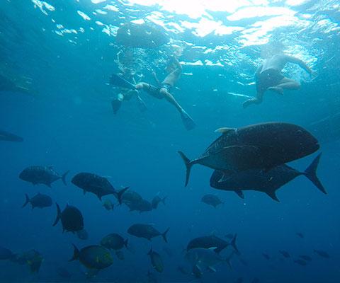 様々な種類の魚を見ることが出来ます