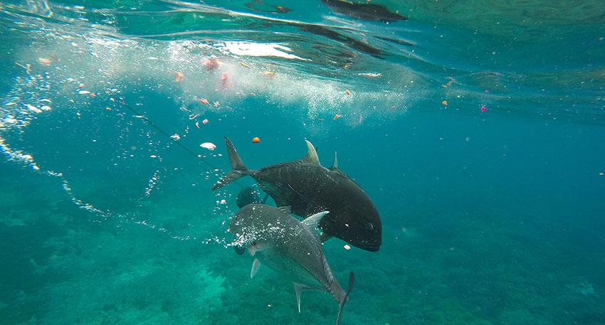 海の景色満喫とレンボンガン島観光