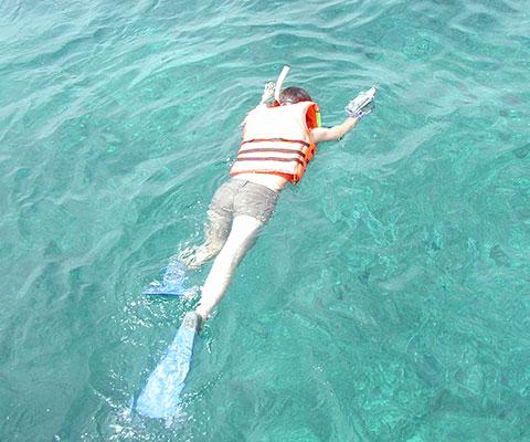 海の中の景色をシュノーケリングで楽しみましょう