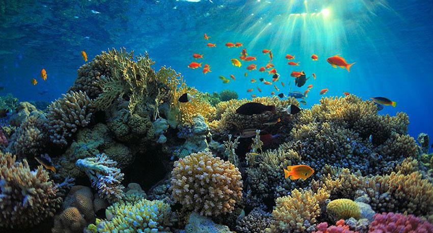海では色鮮やかな魚やサンゴ礁を見られます
